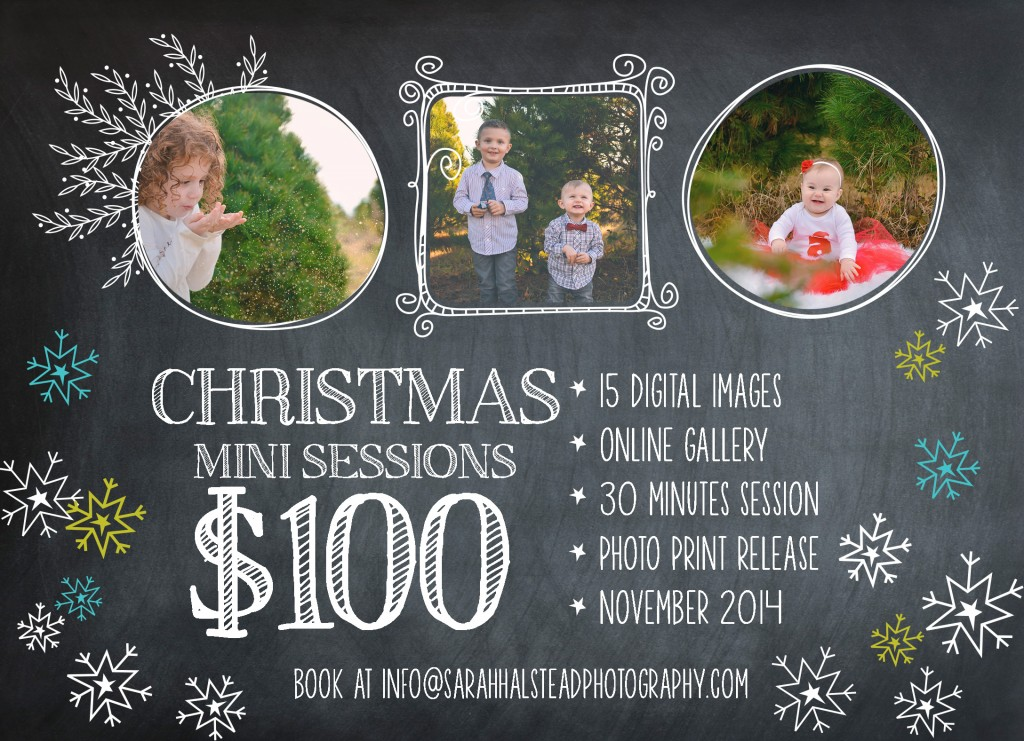 Virginia Beach Christmas Tree Farm Minis